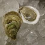 Huîtres de Sober Island